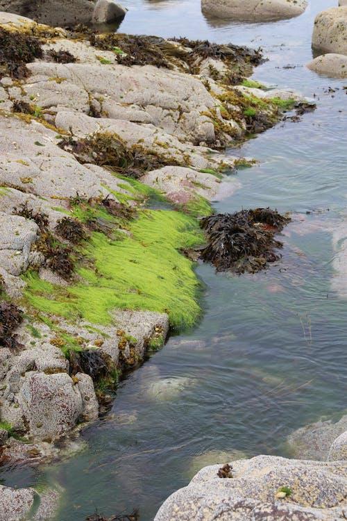 Ilmainen kuvapankkikuva tunnisteilla kivet, levät, meri, vesi
