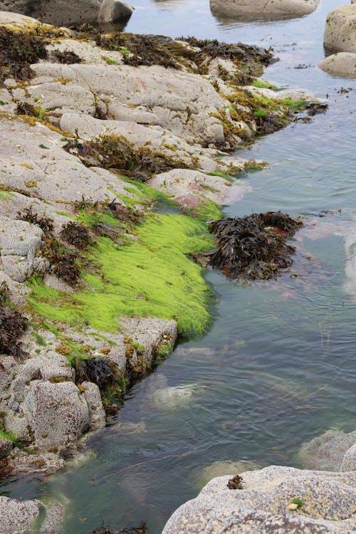 Kostenloses Stock Foto zu algen, felsen, grün, meer