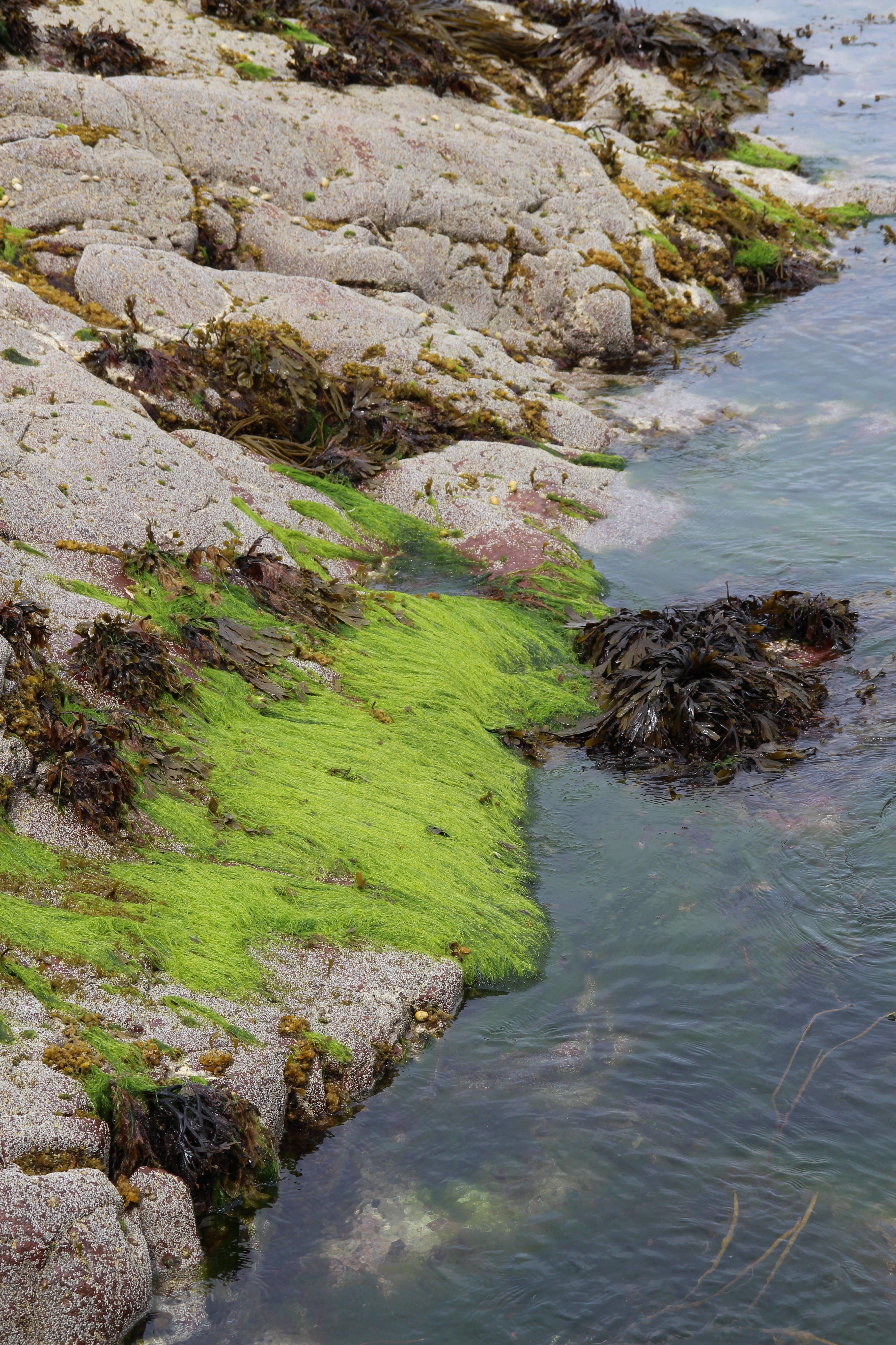 Free stock photo of algae, green, rocks, sea
