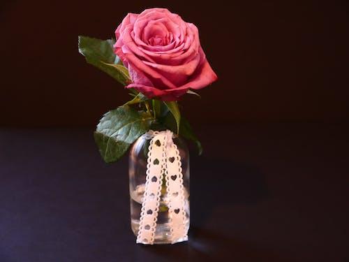 Gratis stockfoto met 4k achtergrond, bloeien, bloeiend, bloem