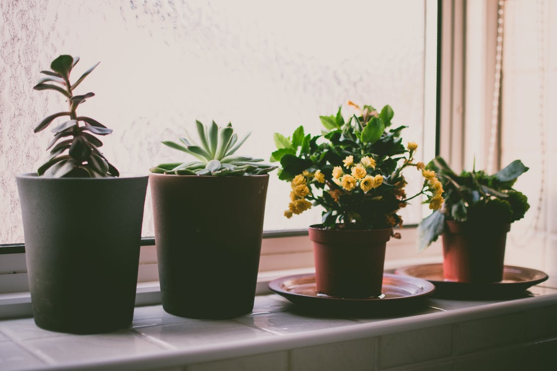 Photography Of Assorted Plants