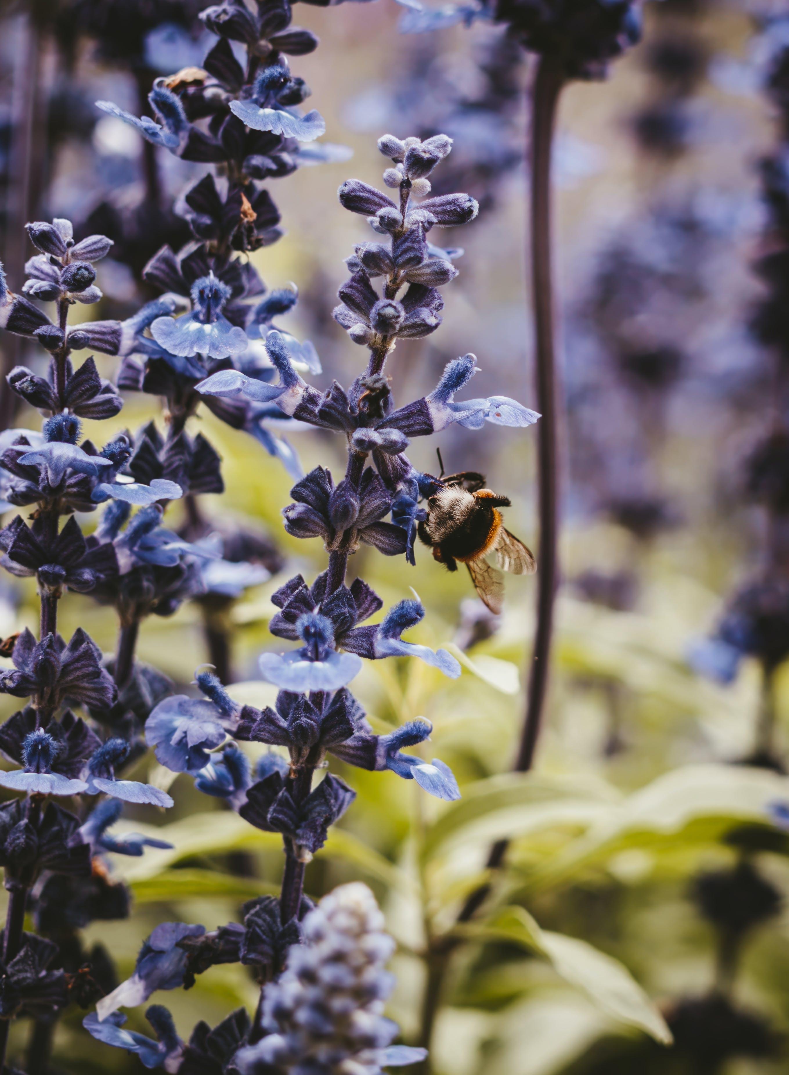 Gratis stockfoto met aromatisch, bestuiving, bloeien, bloemblaadjes