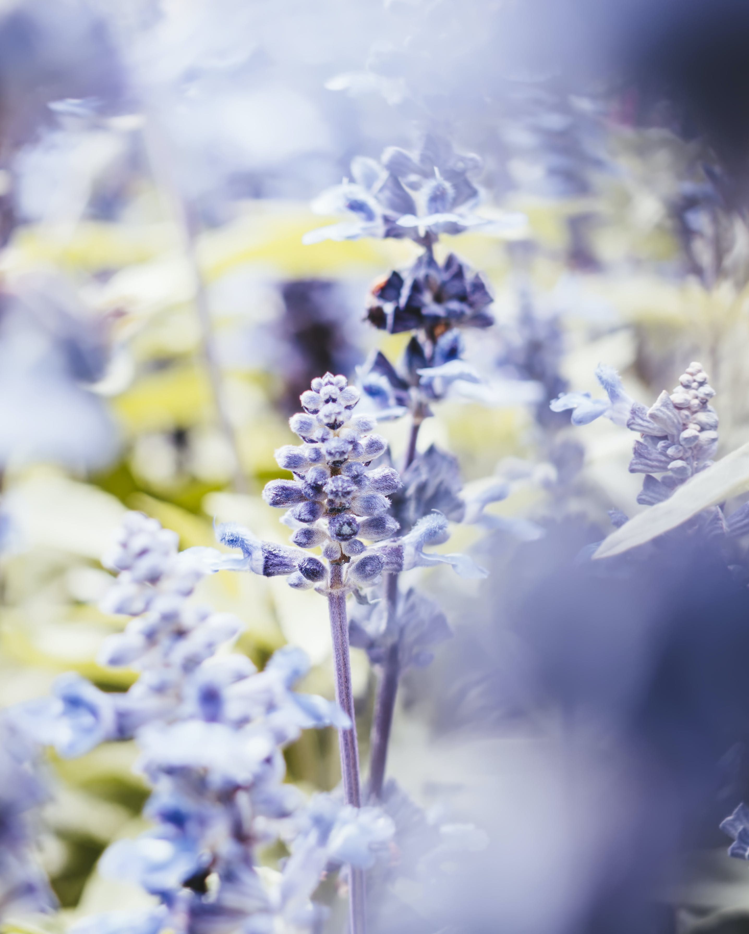 Close-Up Photography of Lavender Flowers