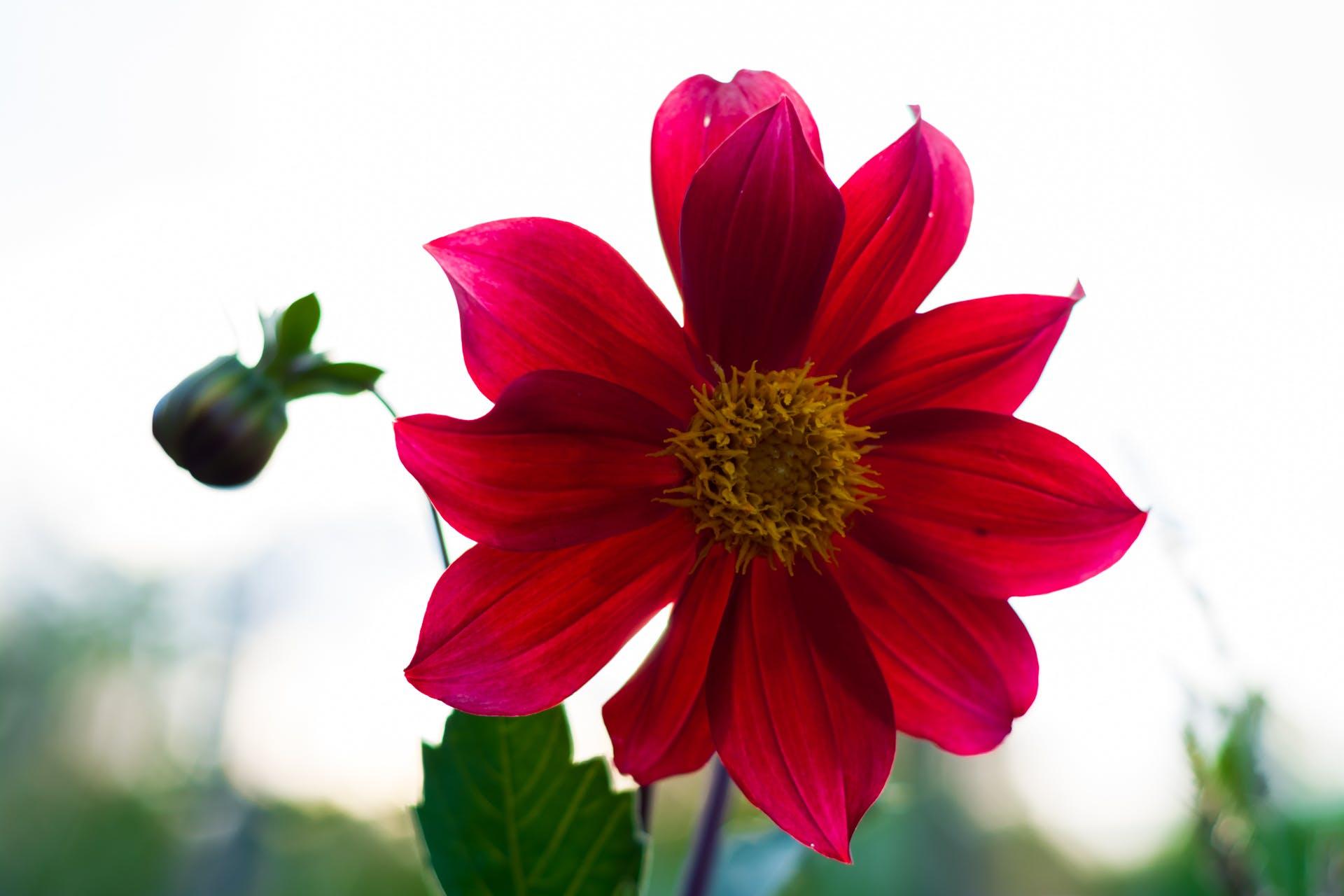 Kostnadsfri bild av blomma, blommor, grön, natur