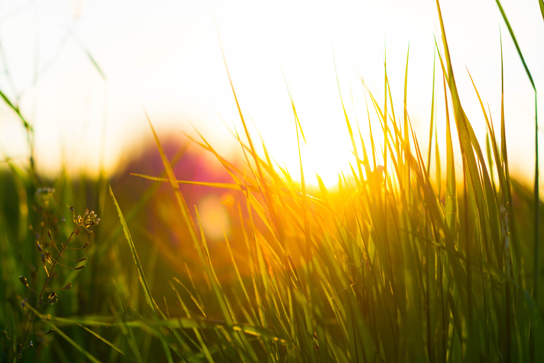 Kostnadsfri bild av gräs, grön, natur, natur tapeter