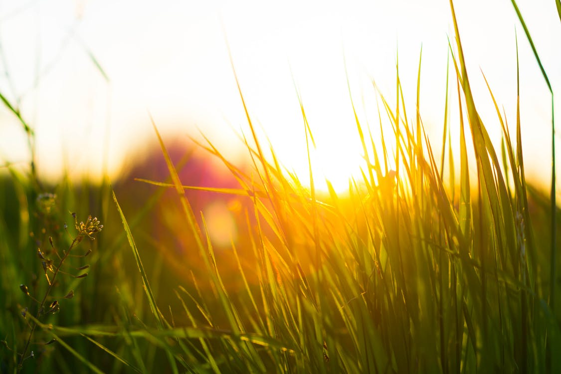 Free stock photo of grass, green, nature