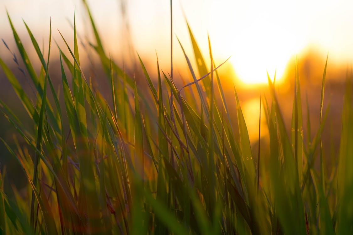 Free stock photo of grass, grassland, green