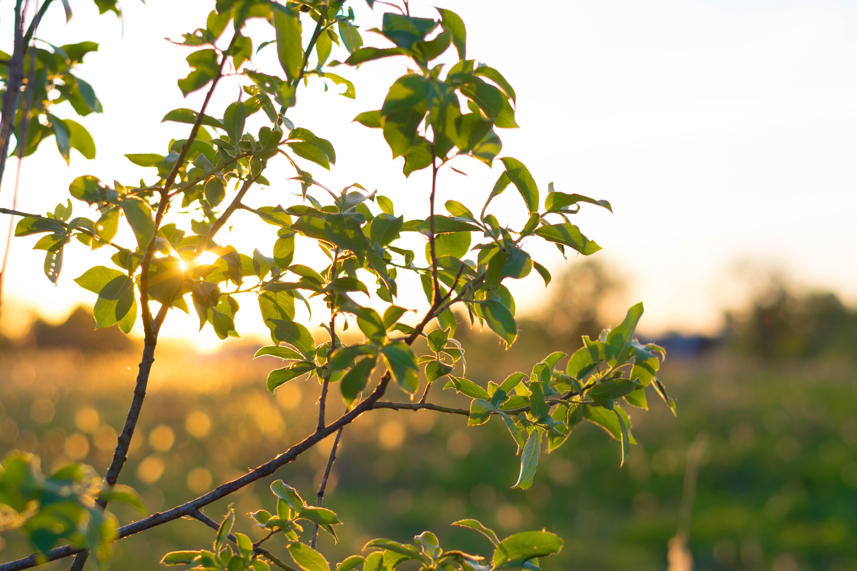 Kostnadsfri bild av gren, grön, natur, solnedgång