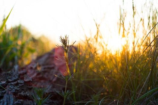 Kostenloses Stock Foto zu natur, sonnenuntergang, wald, gras