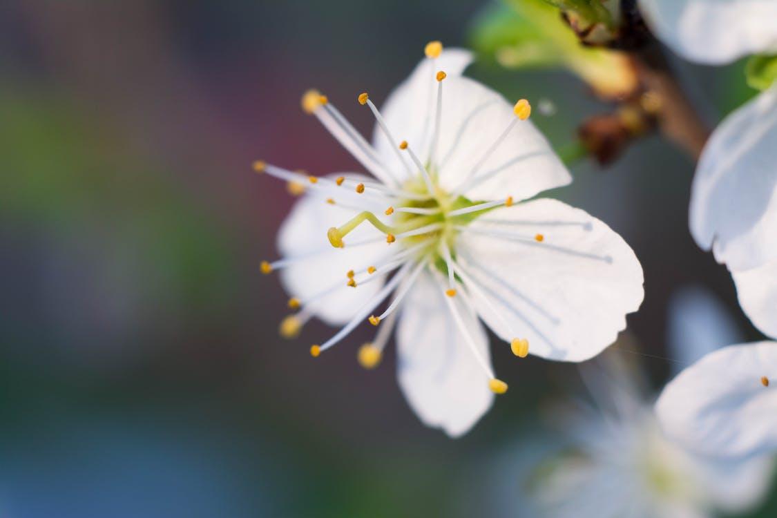 Free stock photo of flower, macro, macro flower