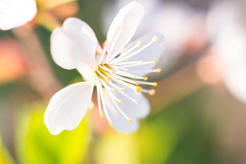 Free stock photo of flower, macro, macro photography