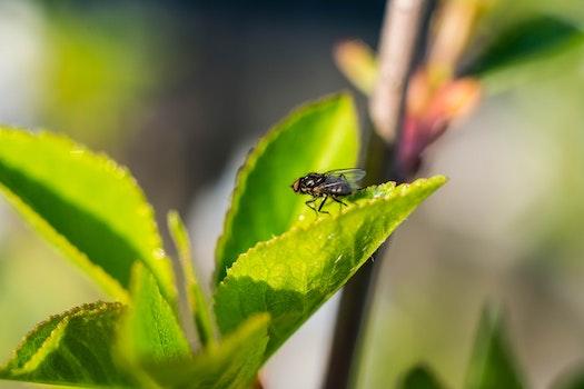 Kostenloses Stock Foto zu natur, grün, bug