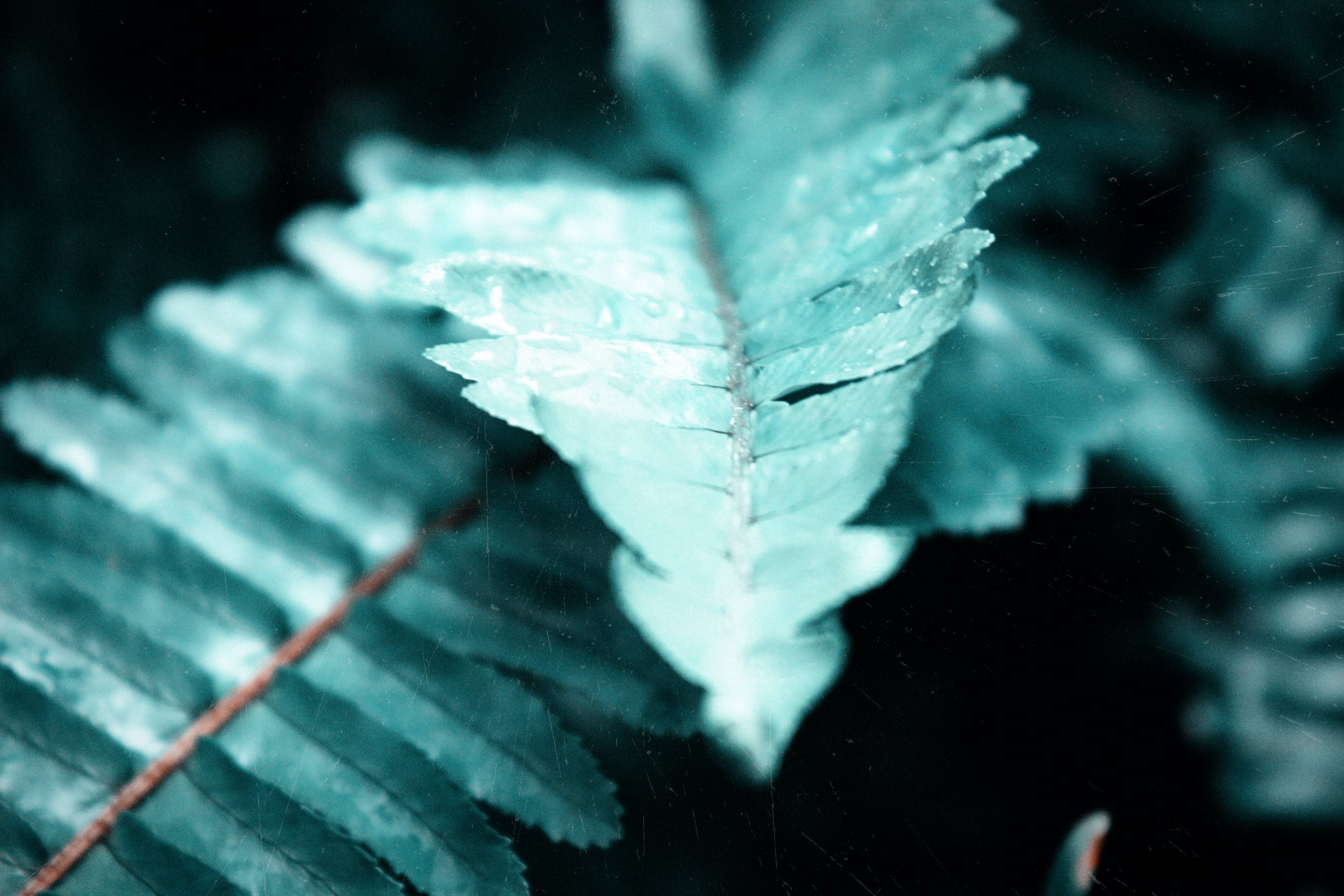Macro Photography Of Fern Leaves