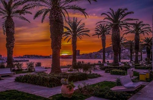 Free stock photo of sunset, vacation