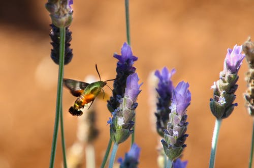 Photo of Green and Orange Moth on Flower