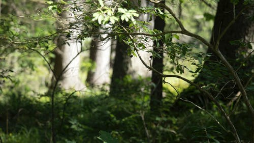 Free stock photo of forest, green, light and shadow, nature