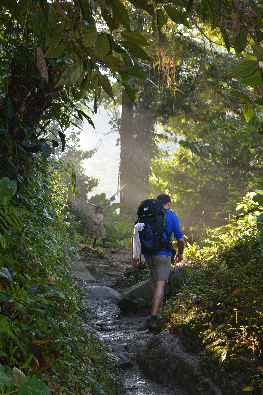 Бесплатное стоковое фото с активный отдых, деревья, дневной свет, живописный