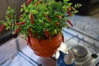 peppers, pot, blur