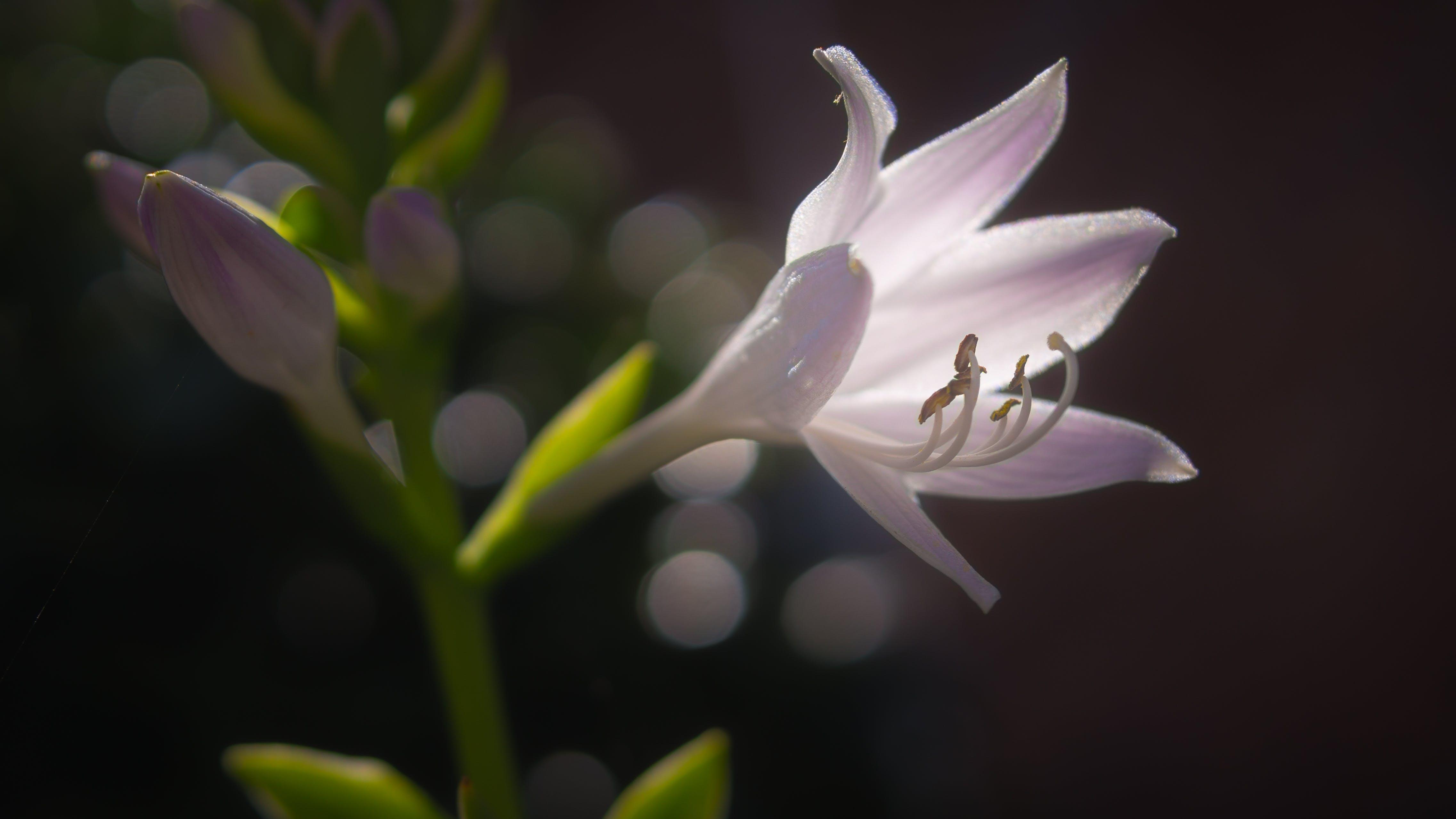 Pink Flower on Shallow Focus Lens