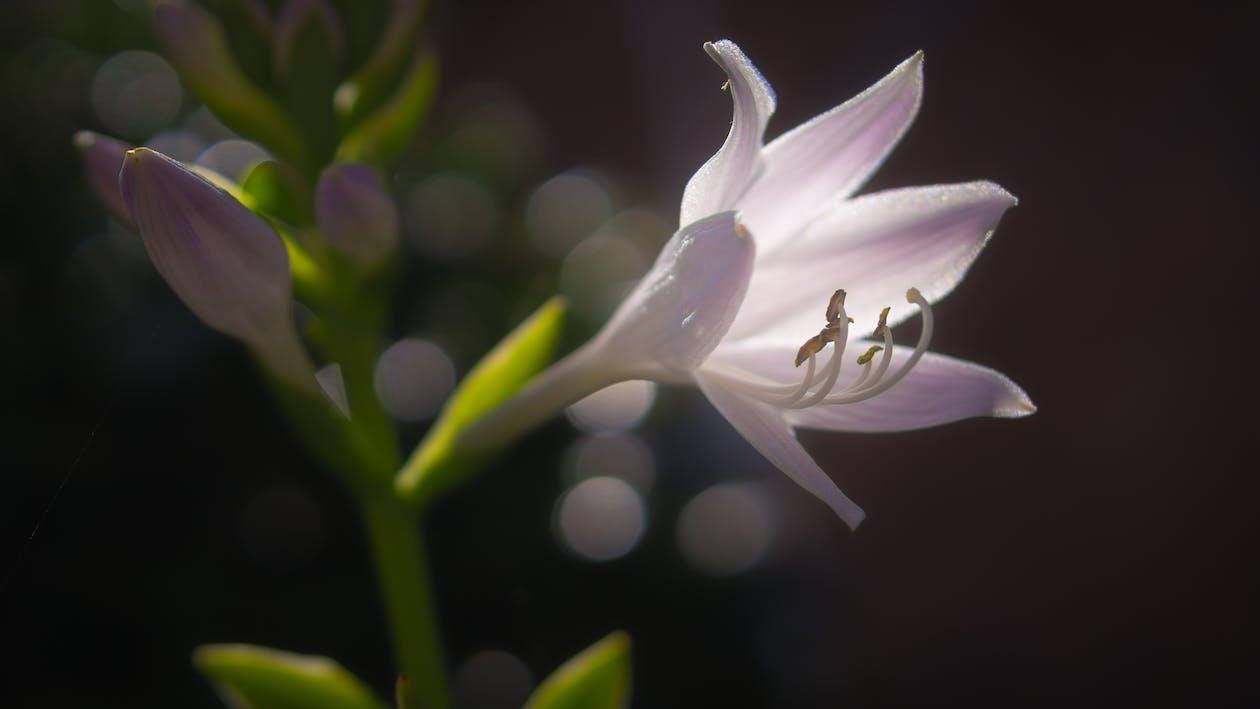 flóra, kvést, květ