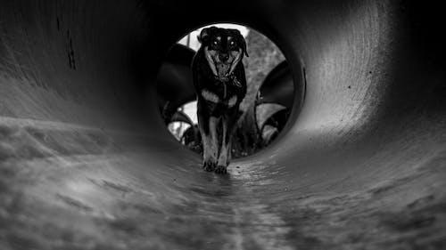 動物, 寵物, 漆黑 的 免费素材图片