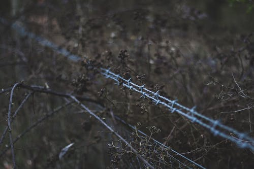 Shallow Focus Photography Of Barbedwire
