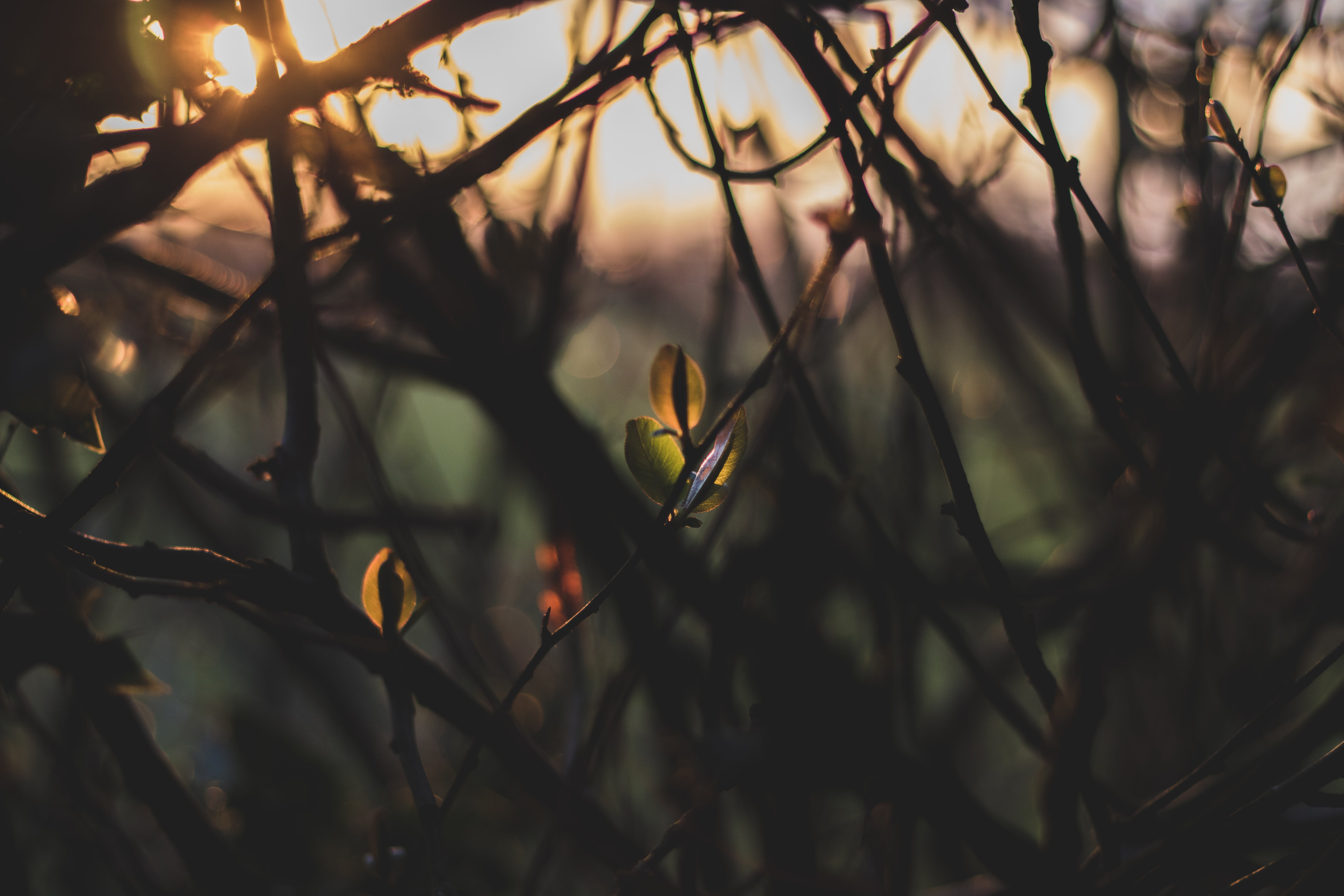 Selective Focus Photography of Vines