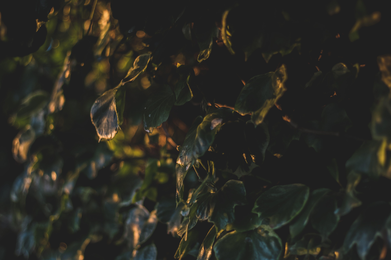 Foto d'estoc gratuïta de capvespre, colors, desenfocament, hora daurada