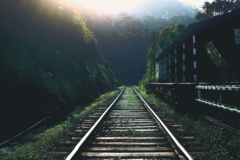 ağaçlar, demir yolu, doğa, orman içeren Ücretsiz stok fotoğraf