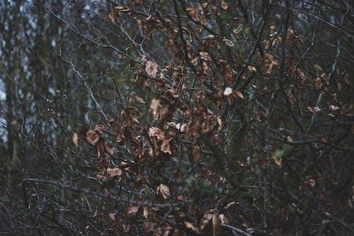 Ảnh lưu trữ miễn phí về cây chết, hàng rào kim loại, Thiên nhiên, tối