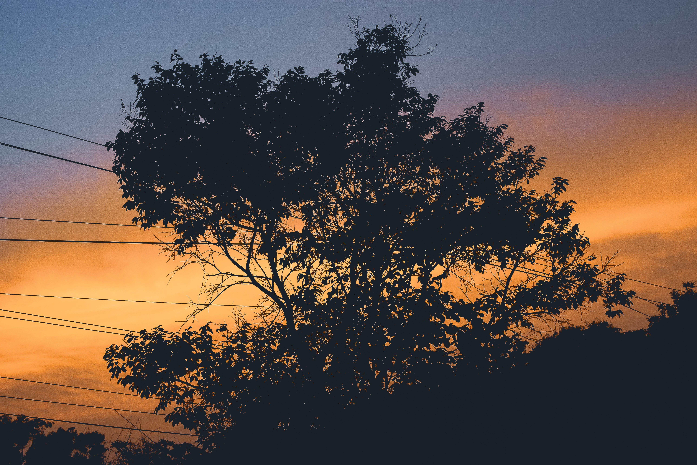 Free stock photo of 35, golden sun, golden sunset, HD wallpaper