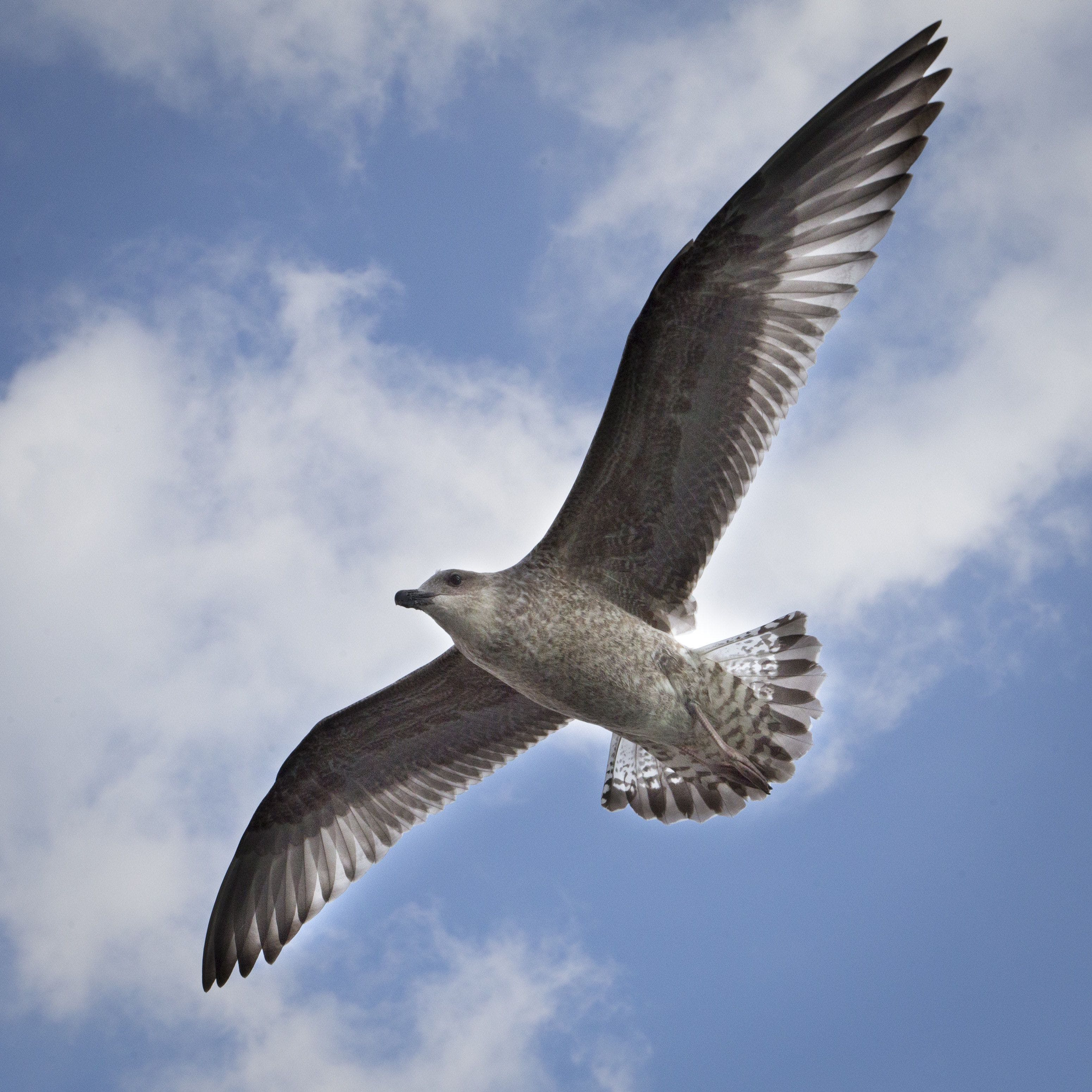 Low Angle Photography of Brown Gull Flying