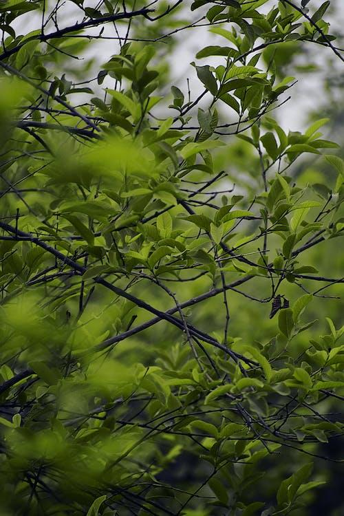 คลังภาพถ่ายฟรี ของ greenry, ต้นมะนาว, ต้นไม้, พืชสีเขียวเข้ม