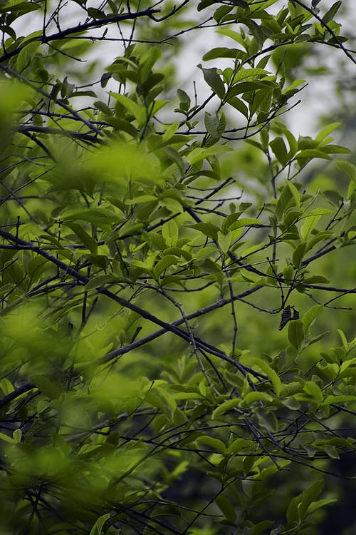 Free stock photo of beautiful, Beautiful greenry, dark green
