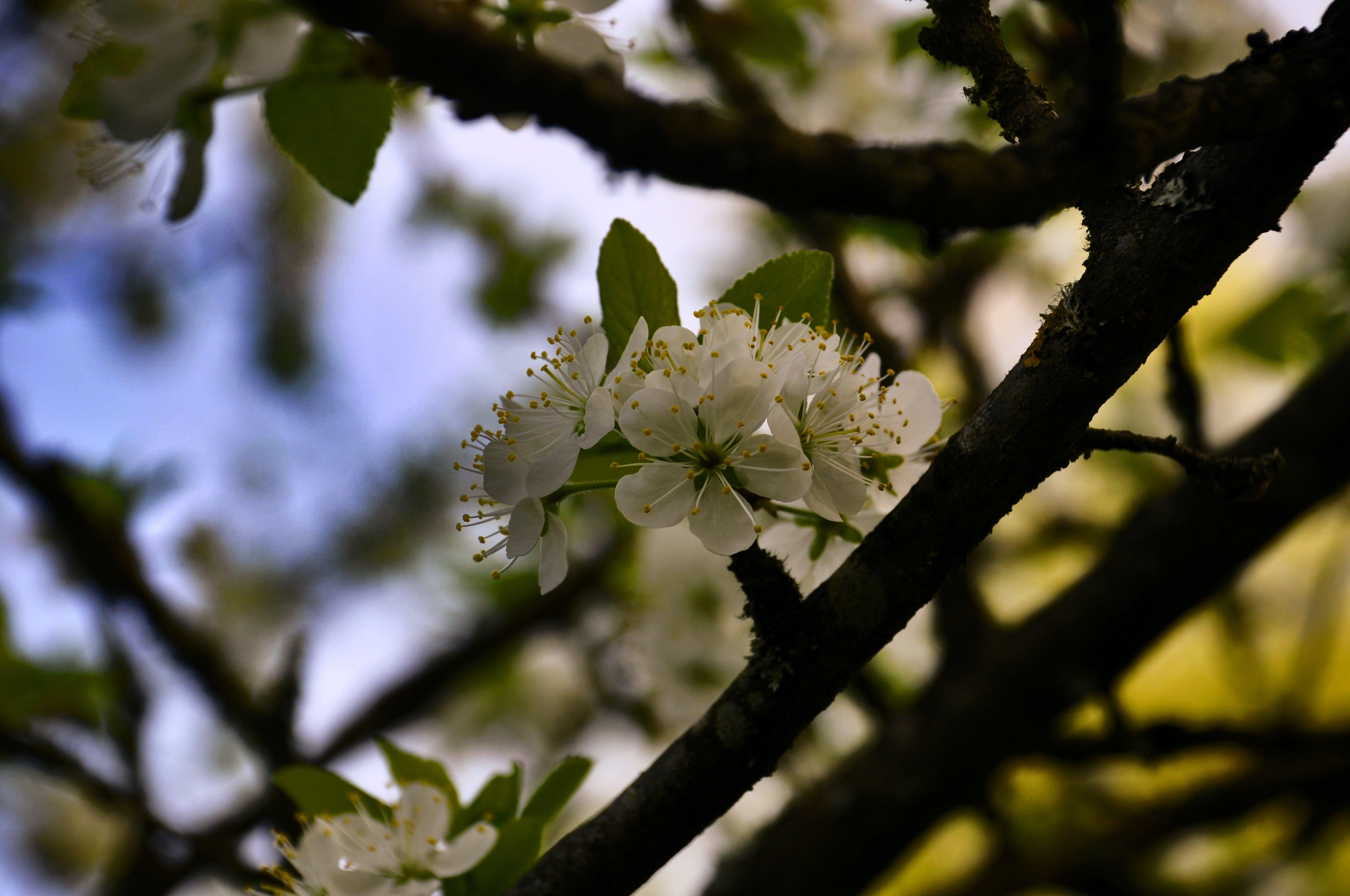 Foto stok gratis # kayu, alam, Bunga pertama, pohon