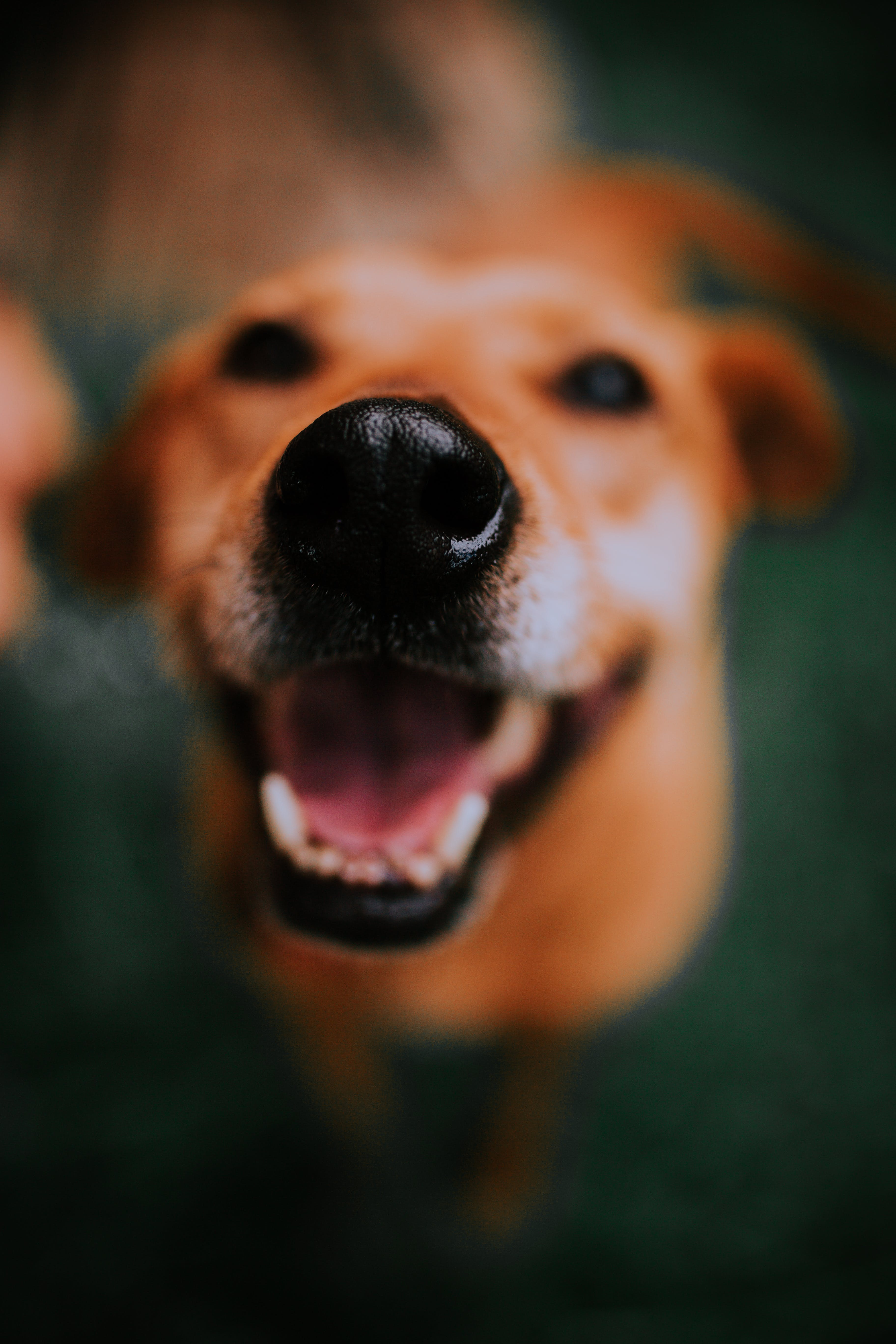 Close-up Photo of a Dog's Snout
