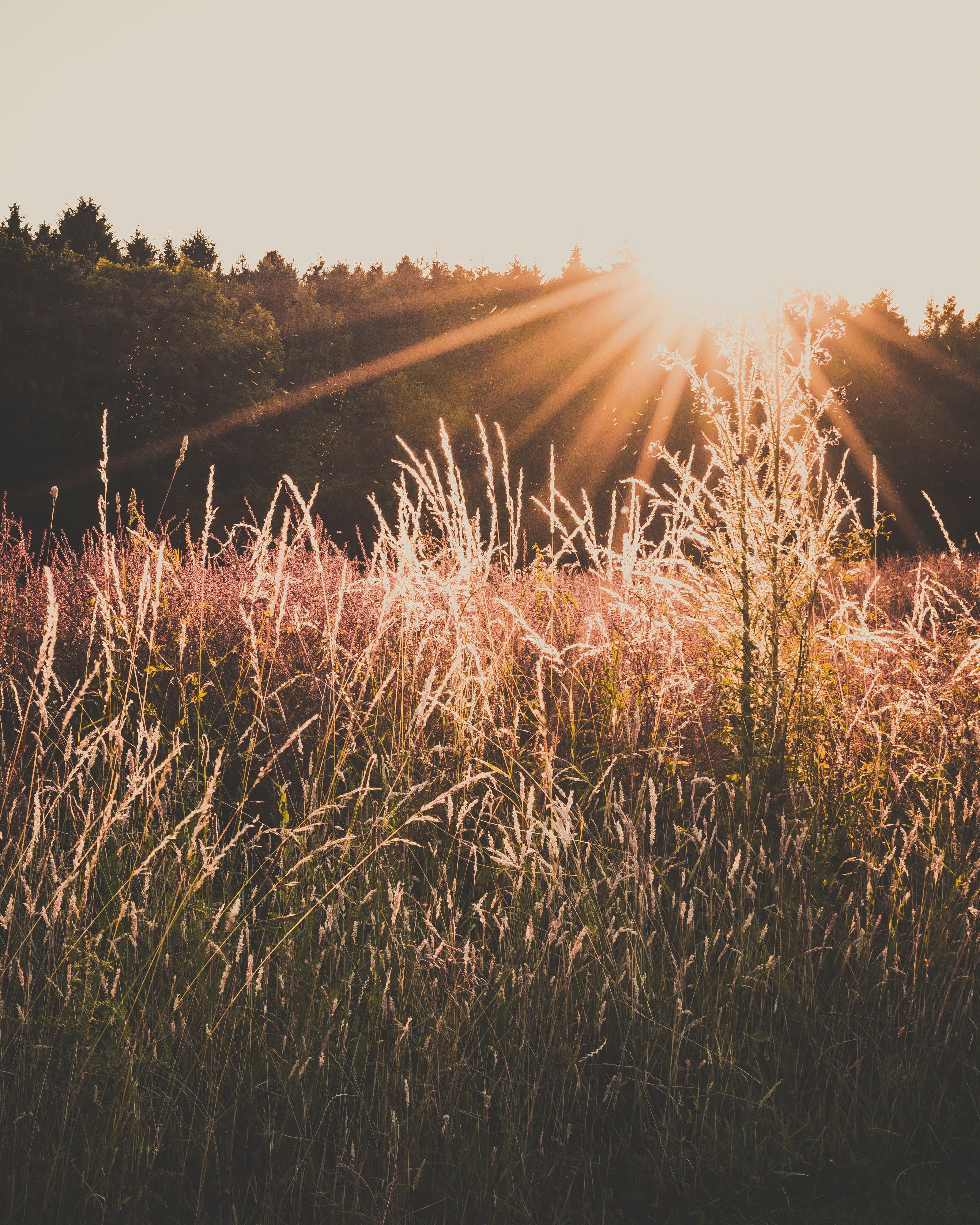Green Grass Field during Orange Sunset