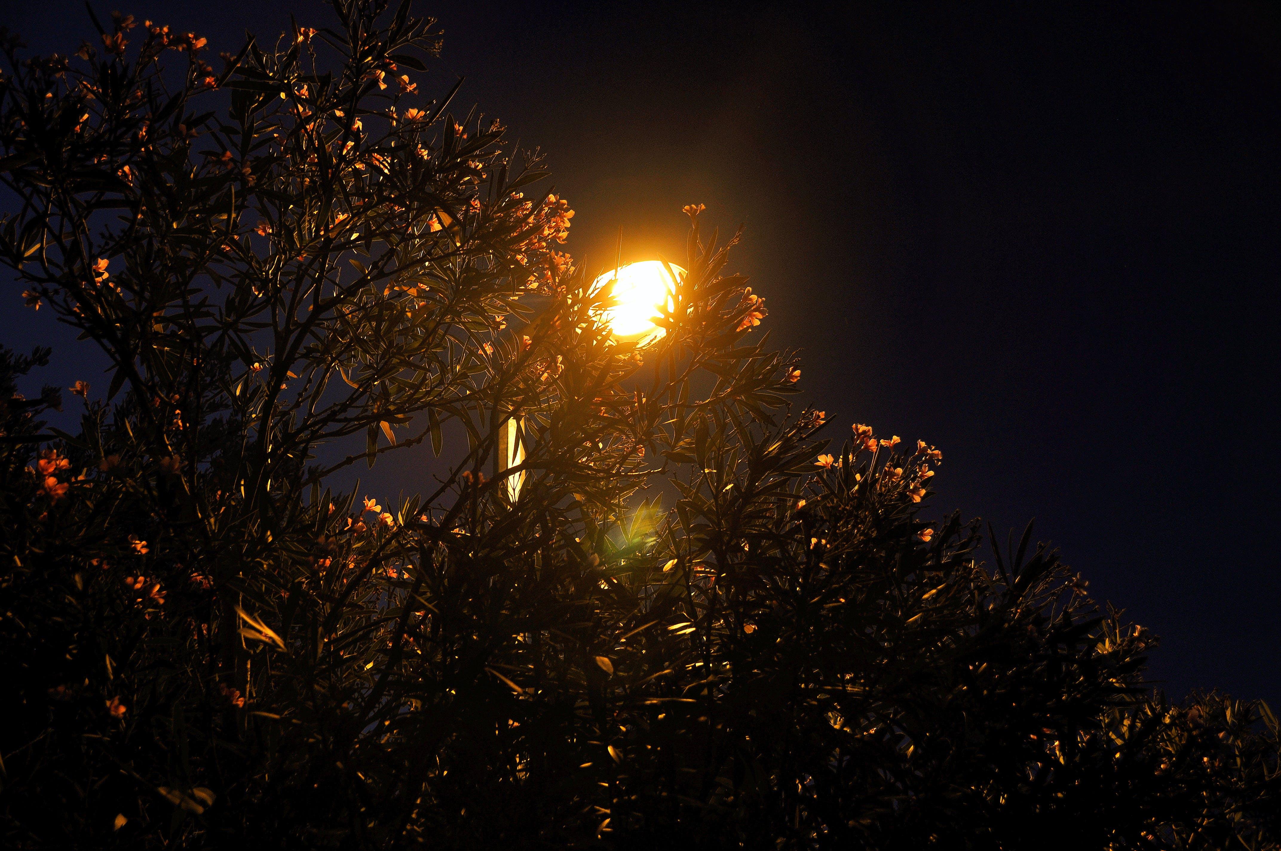 Fotos de stock gratuitas de árbol, lámpara, Luces de noche