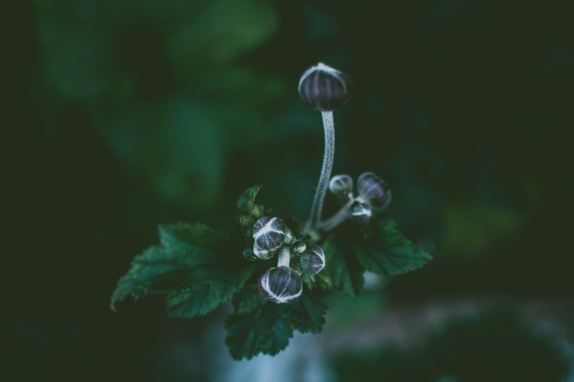 botaniczny, delikatny, flora