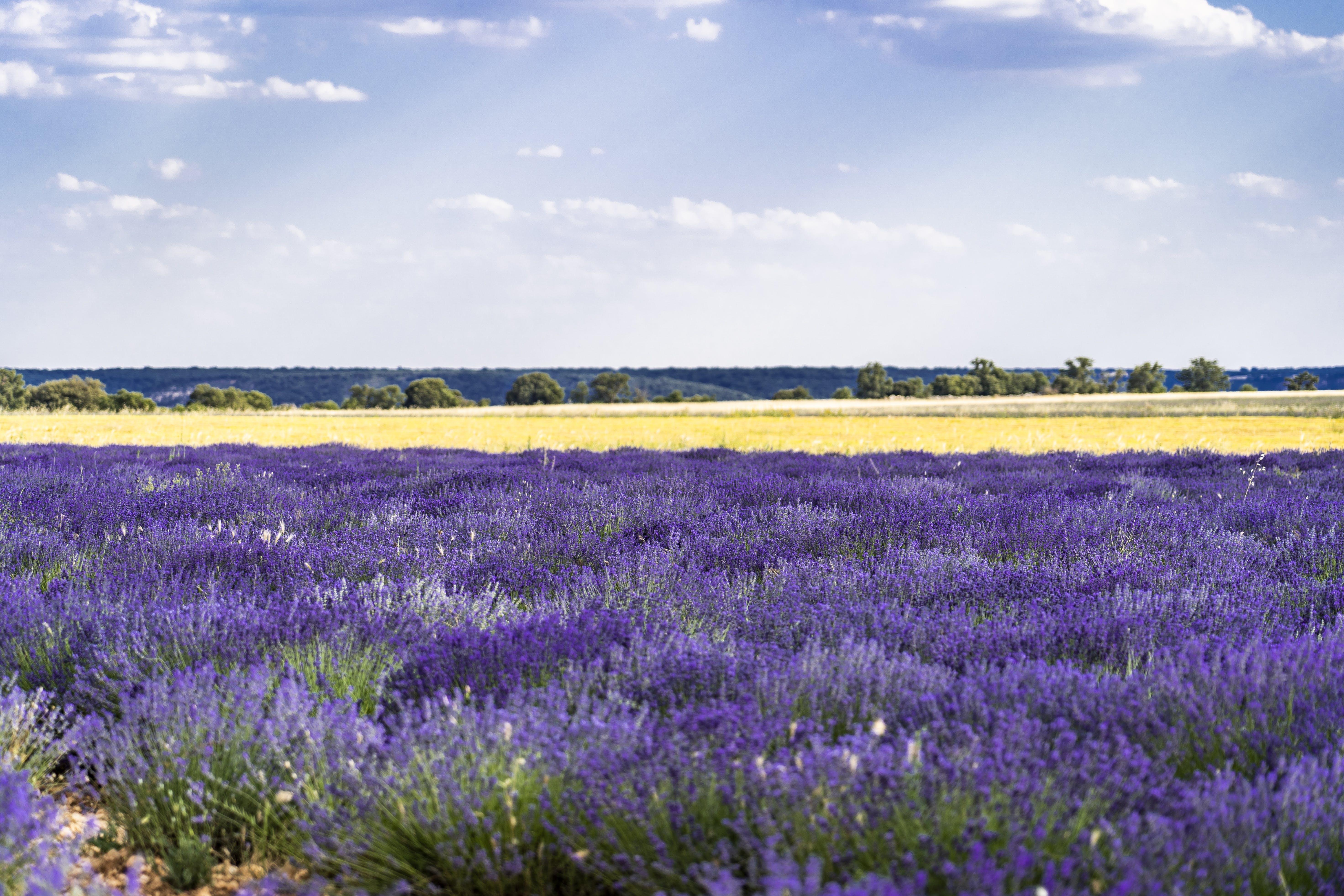 Photography Of Lavender Field Under Clear Blue Sky