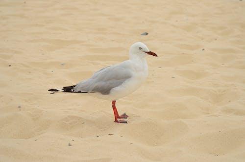 Ảnh lưu trữ miễn phí về bờ biển, cát, chim, chim nước