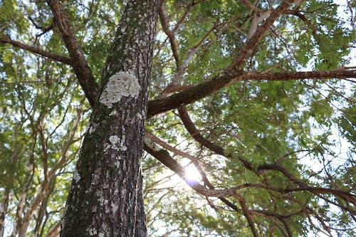 Gratis lagerfoto af #træ, ã¡rvore, natur, tørt træ