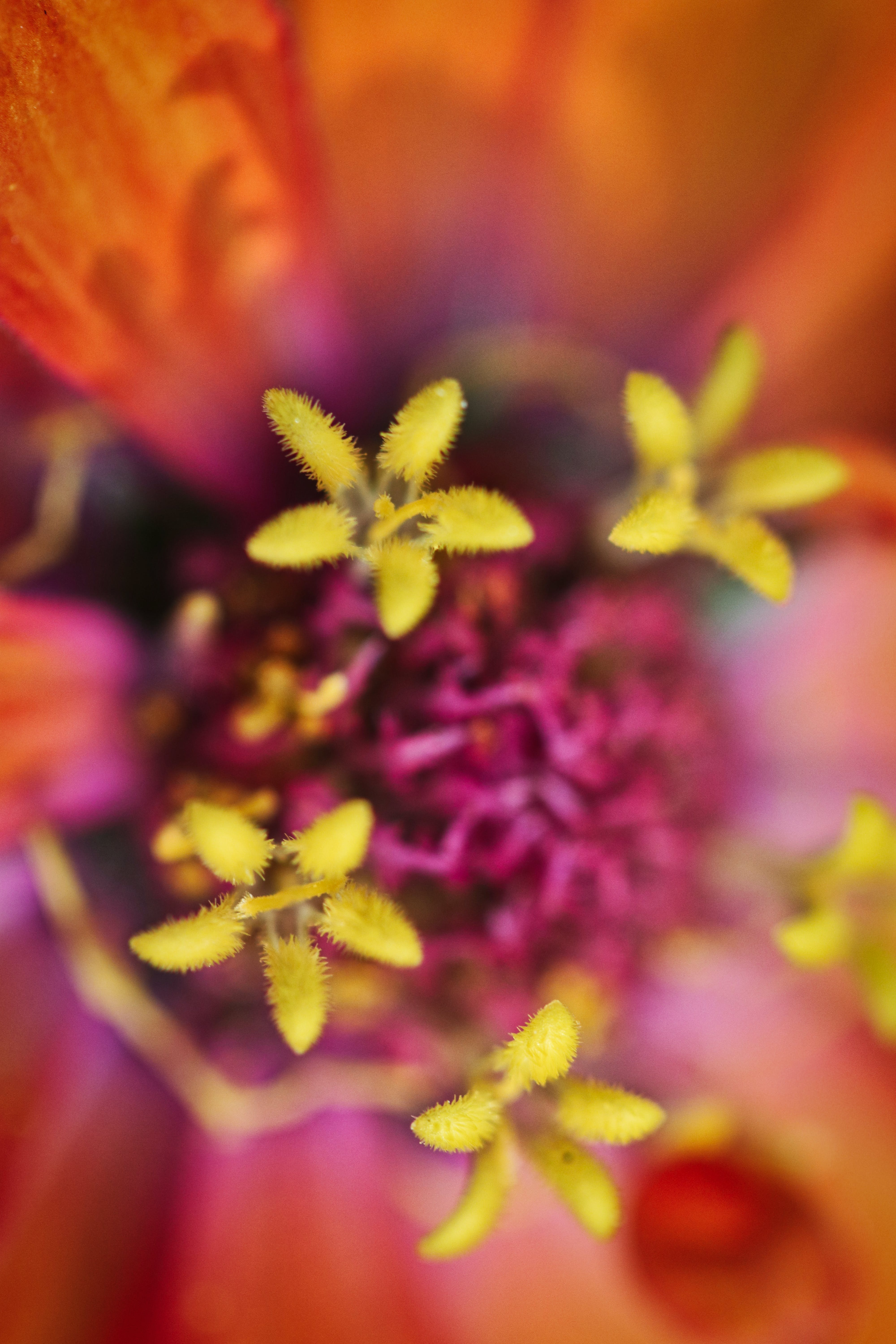 Top View Photography Of Flower