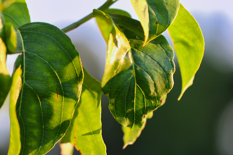 Kostenloses Stock Foto zu pflanze, blätter, grün, makro