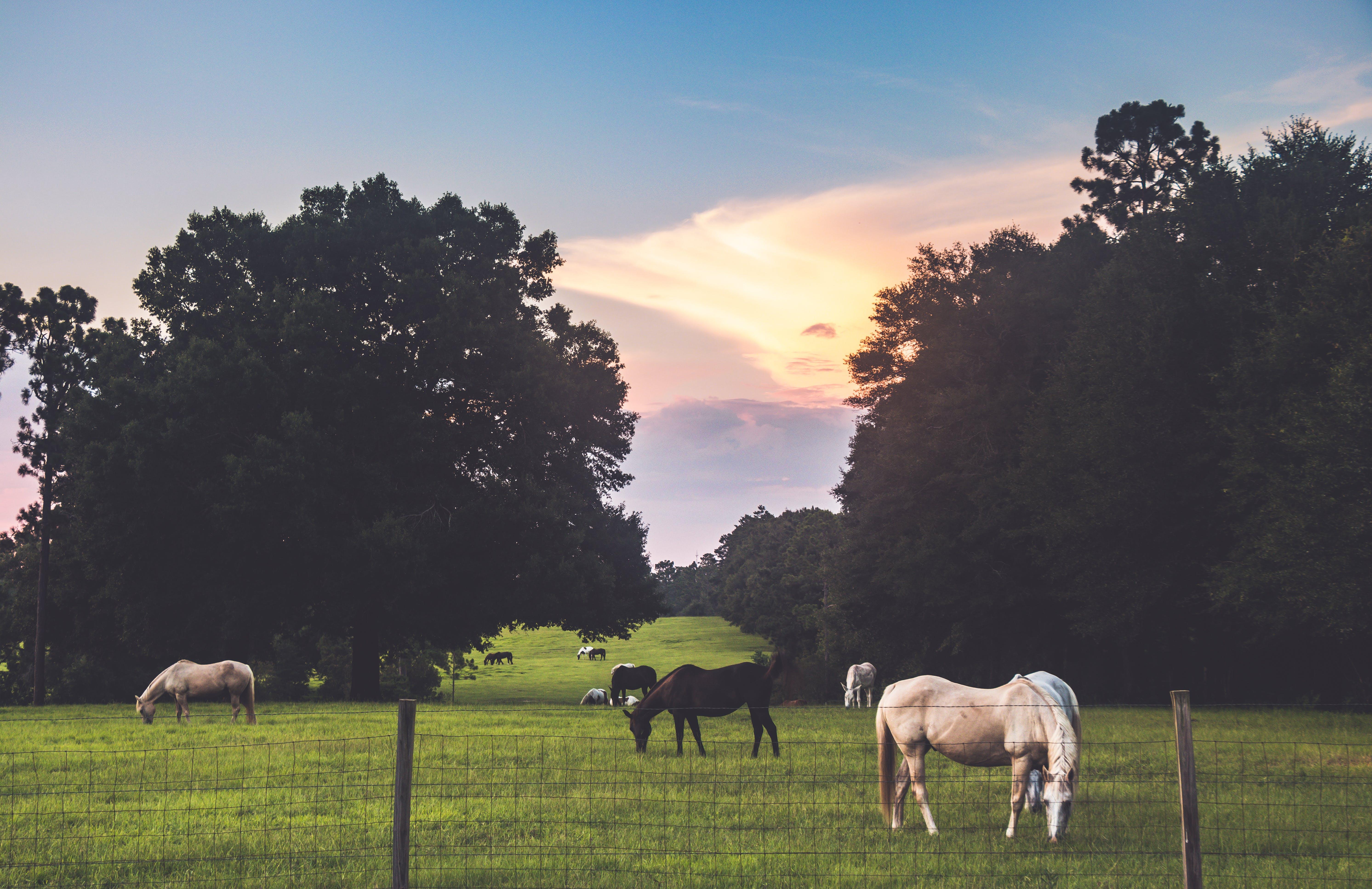 Free stock photo of field, countryside, farm, animals