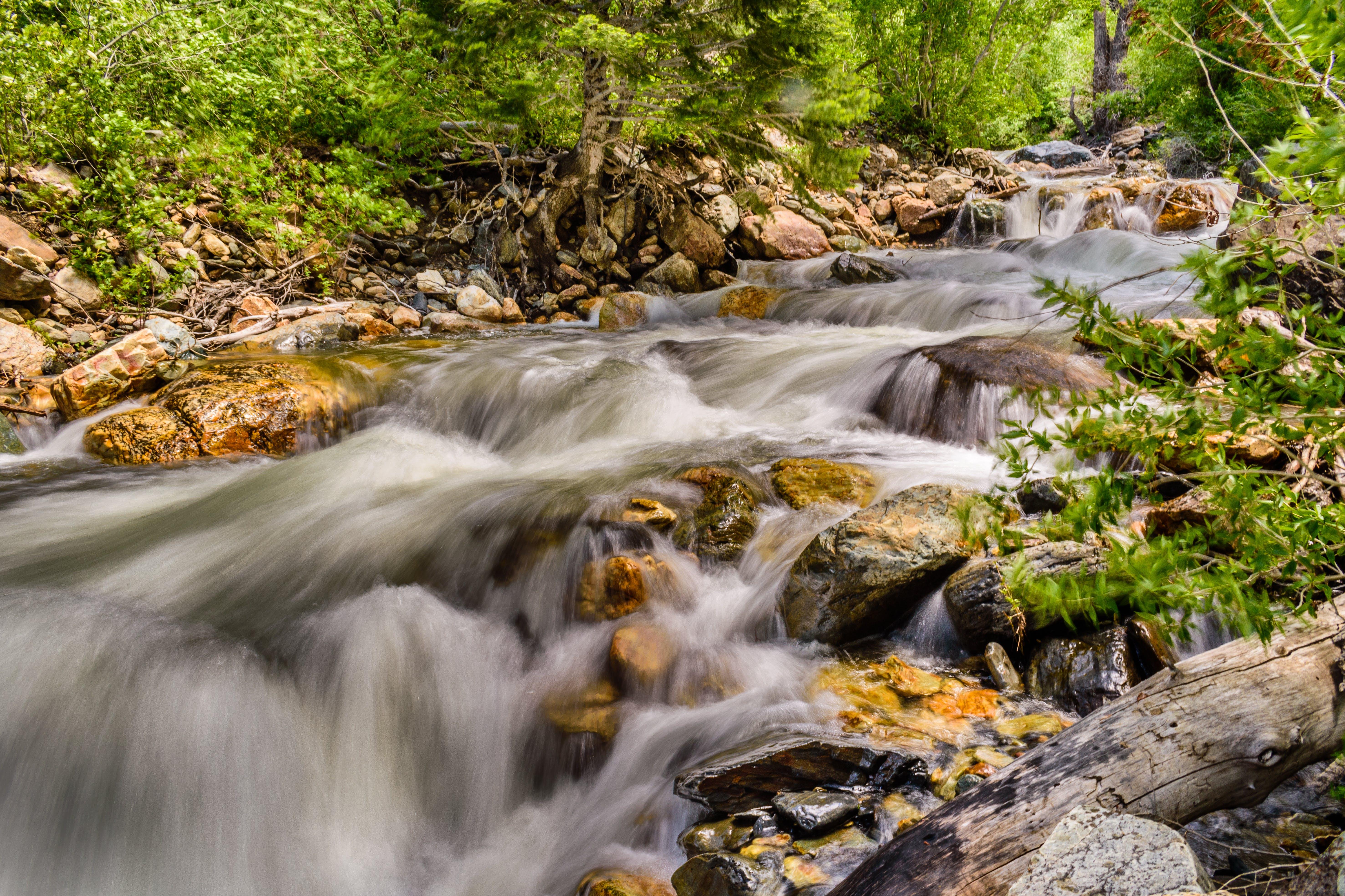 Immagine gratuita di acqua, flusso, foresta, lunga esposizione