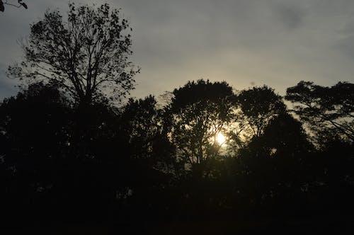 Photos gratuites de nature