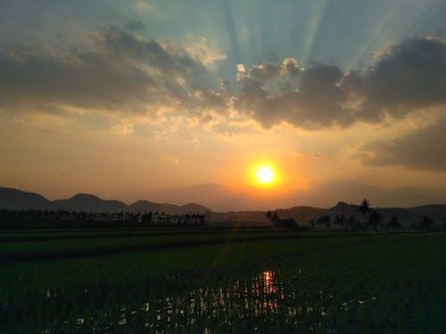 Photos gratuites de coucher de soleil, nature