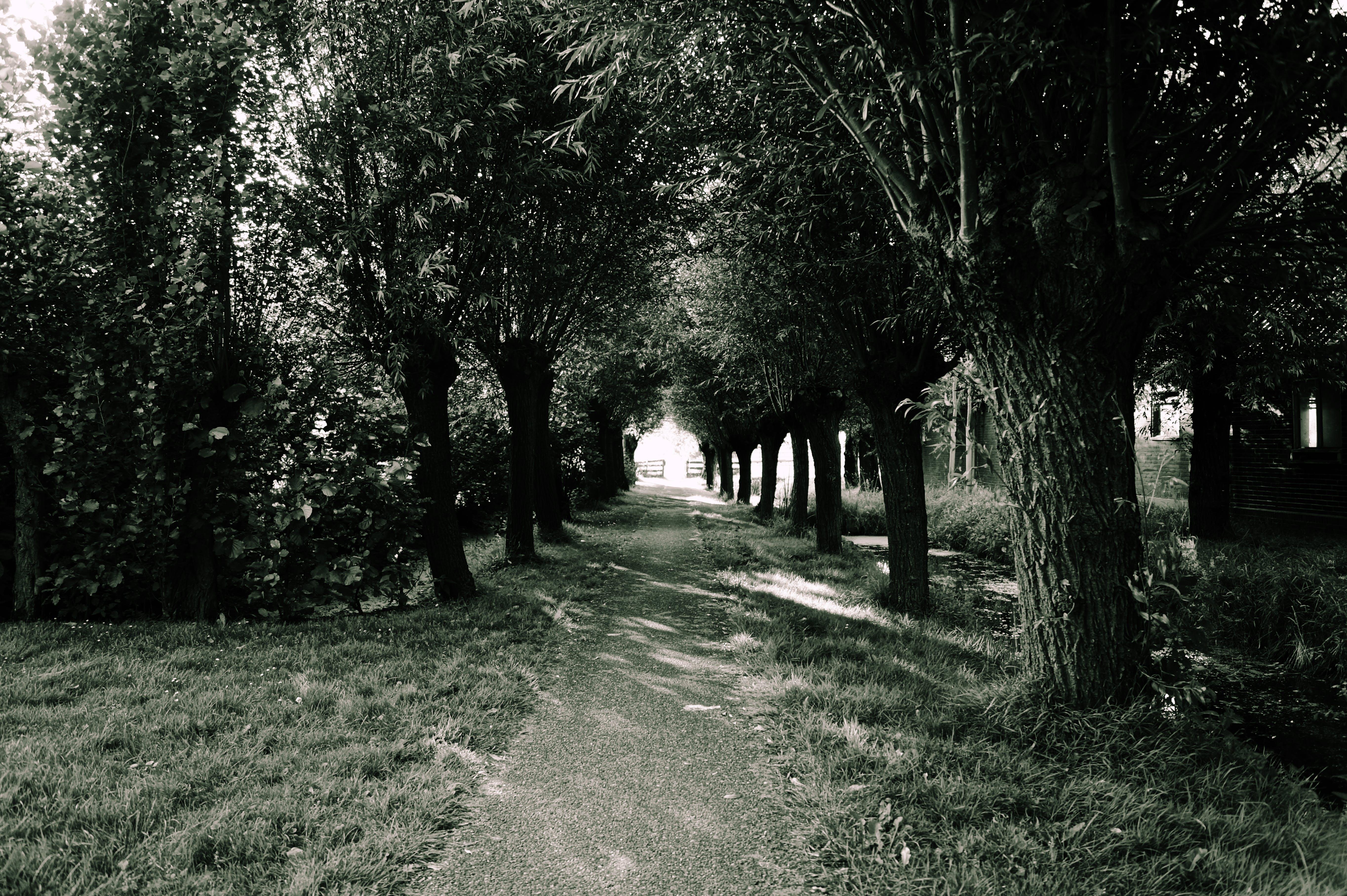 árnyék, erdő, evez