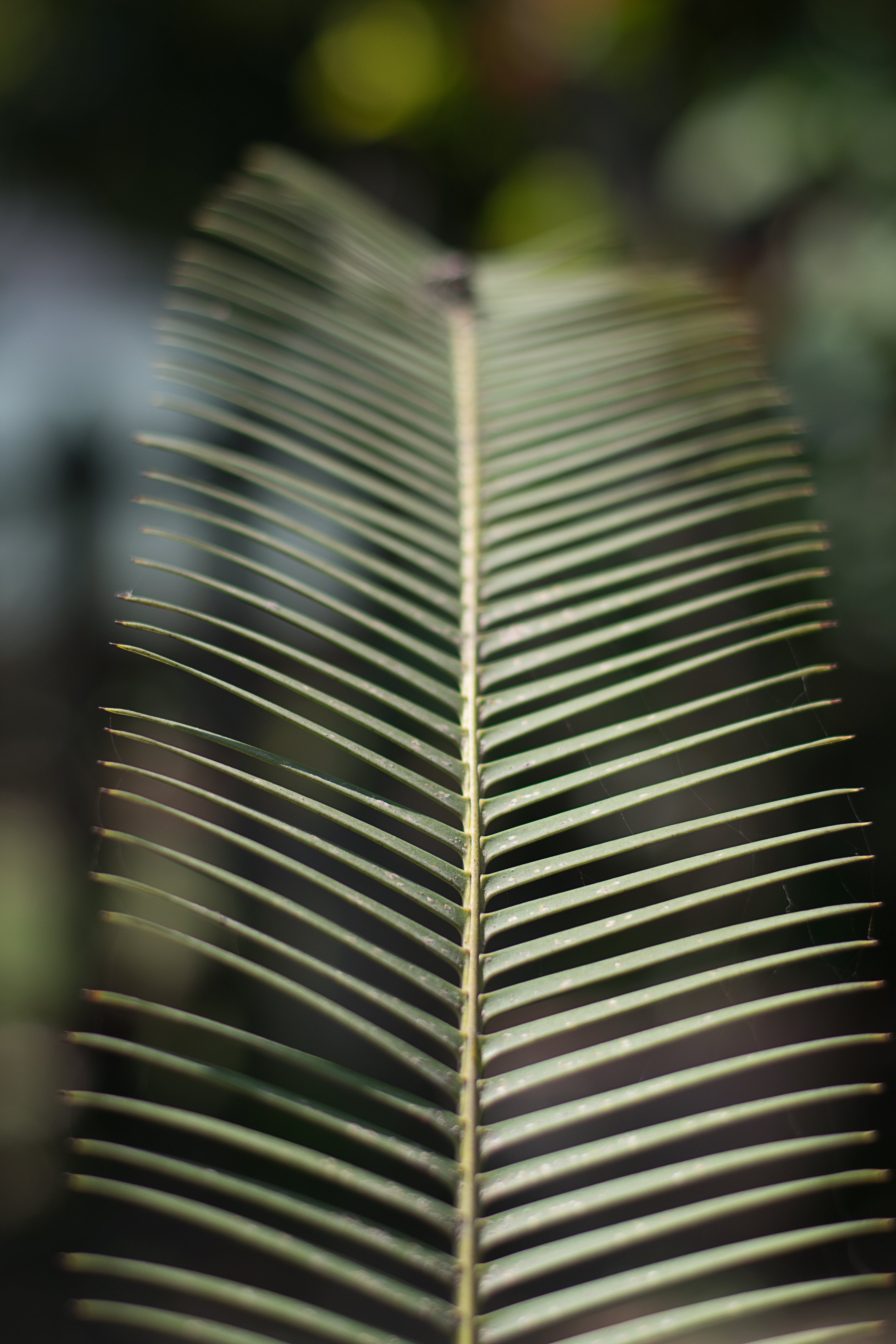 Photo of Coconut Leaf